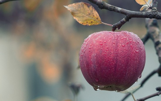 jabłko-krople_550