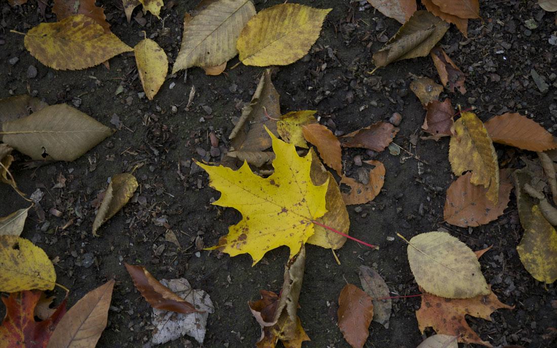 liście jesień ulica