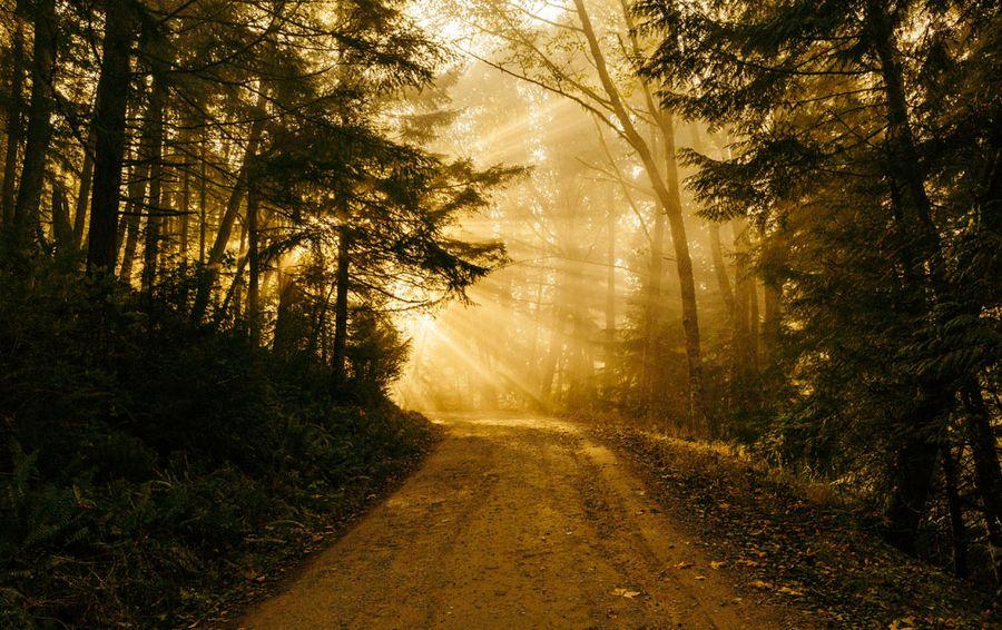 las-słońce-promienie