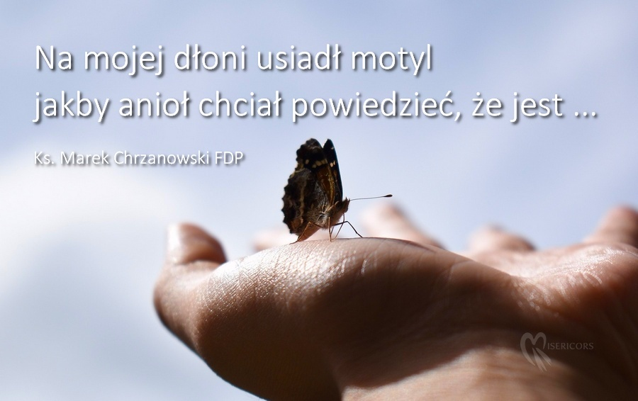 Wiersz O Aniołach Ks Marek Chrzanowski Fdp Misericors